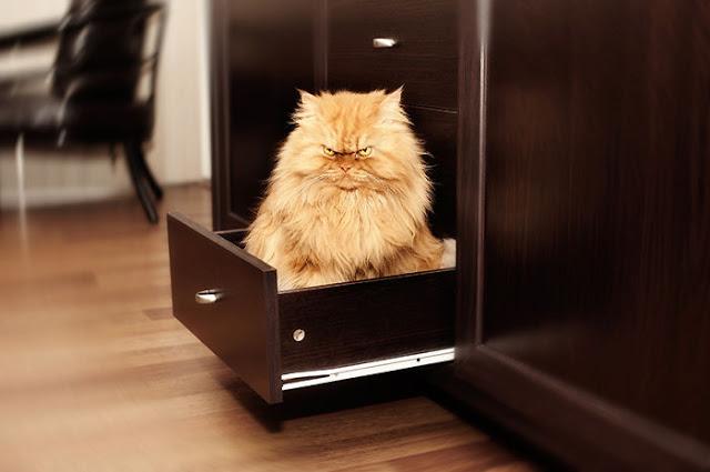 garfi-evil-grumpy-persian-cat-1